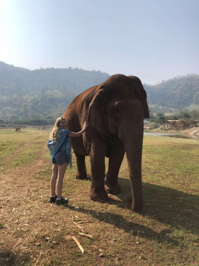 Ciara+Madden+spent+four+days+volunteering+and+learning+about+the+effects+the+tourism+and+logging+industries+have+on+elephants+at+an+elephant+rescue.+